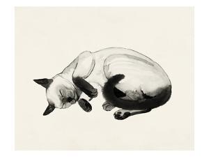 Cat Laze III by Grace Popp