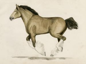 Clydesdale II by Grace Popp
