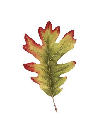 Fall Leaf Study II