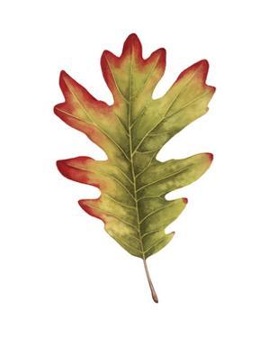 Fall Leaf Study II by Grace Popp