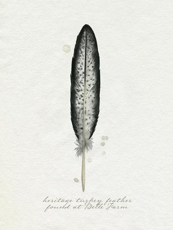 Found Feather II