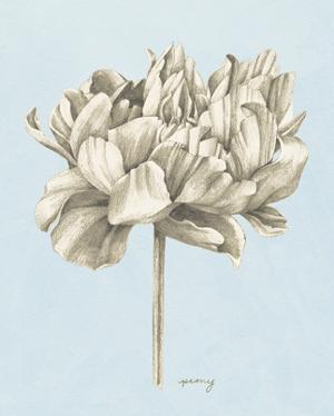 Graphite Botanical Study IV by Grace Popp