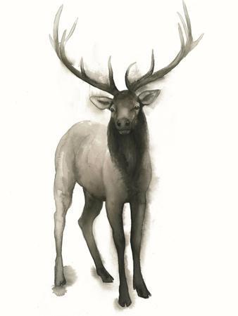 Majestic Wildlife II
