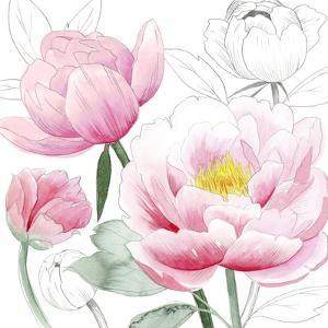 May Peonies I by Grace Popp