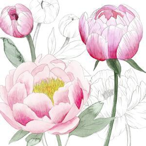 May Peonies II by Grace Popp