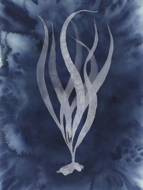 Midnight Kelp I by Grace Popp