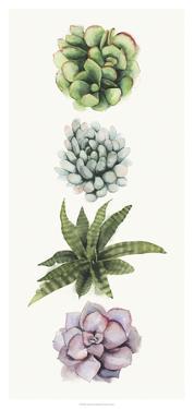 Row of Succulents II by Grace Popp