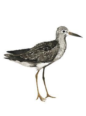 Sea Bird III by Grace Popp