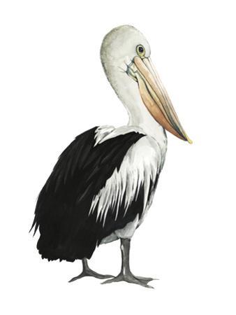 Sea Bird IV by Grace Popp
