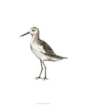 Sea Bird VI by Grace Popp