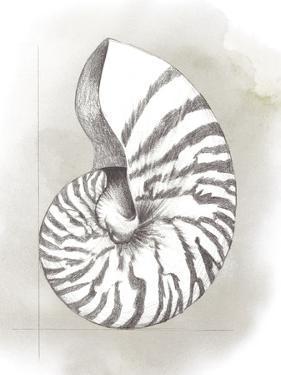 Shell Diagram III by Grace Popp