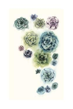 Succulent Cluster I by Grace Popp