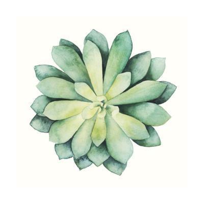 Tropical Plant VI by Grace Popp