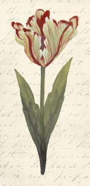 Twin Tulips I by Grace Popp