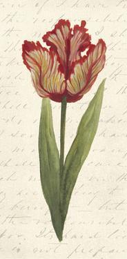 Twin Tulips II by Grace Popp