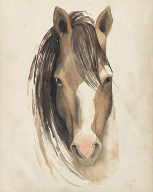Watercolor Animal Study V by Grace Popp