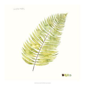 Watercolor Leaf Study IV by Grace Popp