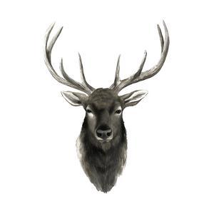Western Animal Study V by Grace Popp