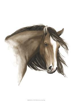Wild Horse I by Grace Popp