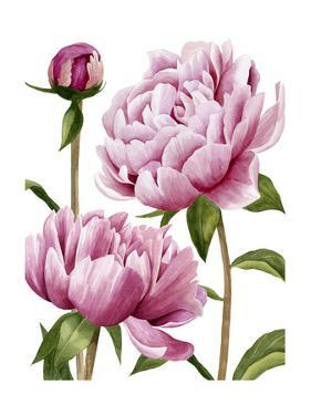 Winsome Peonies I by Grace Popp