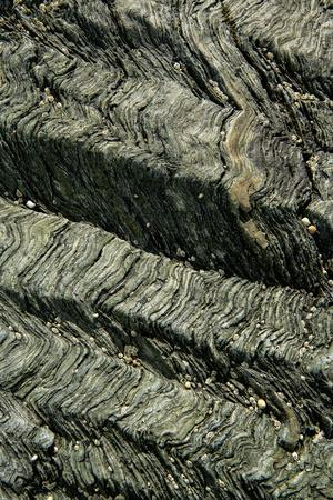 Crenulation cleavage developed in Pre-Cambrian age chlorite schist, Wales, UK, May