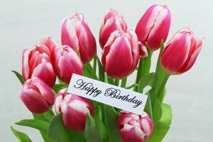 Happy Birthday Card with Pink Tulips by graletta