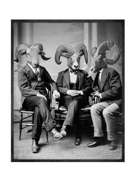 Brotherhood of the Ram by Grand Ole Bestiary