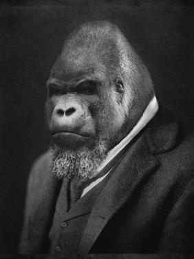 Mario Gorillini by Grand Ole Bestiary