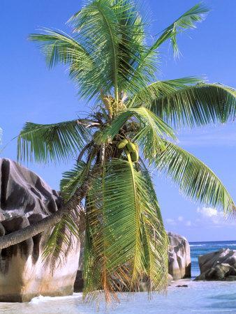 https://imgc.allpostersimages.com/img/posters/granite-outcrops-la-digue-island-seychelles-africa_u-L-P588K40.jpg?p=0