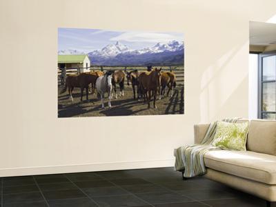 Horses in Corral at Estancia Cristina, Lago Argentino
