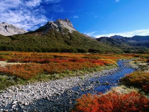 Lenga (Nothofagus) in Autumn Colours, Laguna Jakob by Grant Dixon