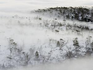 Mist Wreaths Alpine Eucalypt Forest in the Labyrinth, Du Cane Range in Winter by Grant Dixon