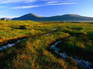 Peat Bogs, Rannoch Moor, Scotland by Grant Dixon