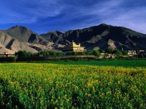 Samye Monastery Across Field, Samye Monastery, Tibet by Grant Dixon