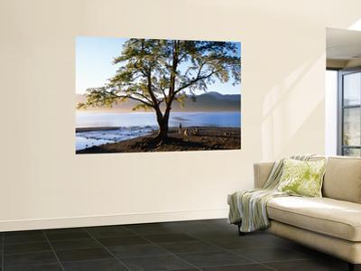 Tree on Playa Catritre, Lago Lacar, San Martin De Los Andes