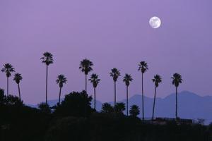 Moon over Palm Trees at Dusk, Hollywood, Los Angeles, California, USA by Grant Faint