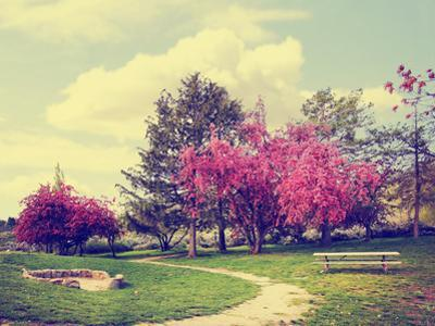 A Beautiful Park with a Path and Bench Done with a Retro Vintage Instagram Filter by graphicphoto