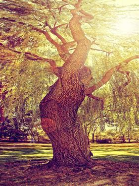 A Forest or Park with Trees with Autumn Leaves Done with a Retro Vintage Instagram Filter by graphicphoto