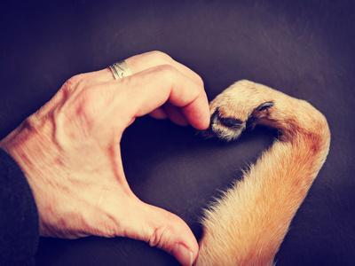 A Person and a Dog Making a Heart Shape with the Hand and Paw Toned with a Retro Vintage Instagram