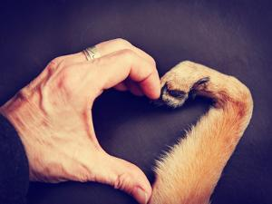 A Person and a Dog Making a Heart Shape with the Hand and Paw Toned with a Retro Vintage Instagram by graphicphoto