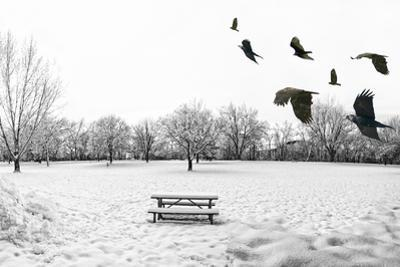 A Scenic Cold Winter Landscape with Snow and Trees and a Flock of Birds Flying By by graphicphoto