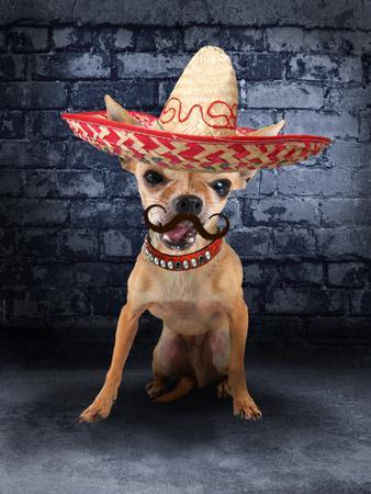 A Tiny Chihuahua With A Sombrero Hat On