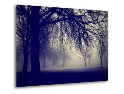 A Very Foggy Day in the Park by graphicphoto