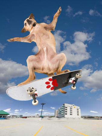 Skate Dog by graphicphoto