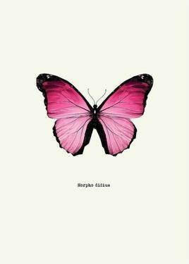 Pink Butterfly by GraphINC