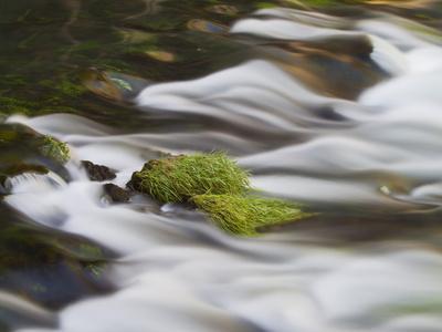 https://imgc.allpostersimages.com/img/posters/grass-at-the-river-d-den-antalya-turkey_u-L-Q11YX7Y0.jpg?p=0
