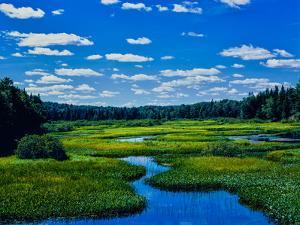 Grass growing in a river, Middle Branch Moose River, New York State Route 28, Adirondack Mountai...