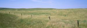 Grass on a Field, Cherry County, Nebraska, USA