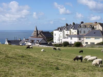 https://imgc.allpostersimages.com/img/posters/grazing-sheep-mortehoe-devon-england-united-kingdom-europe_u-L-PFNJAF0.jpg?p=0