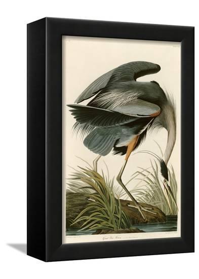 Great Blue Heron-John James Audubon-Framed Stretched Canvas